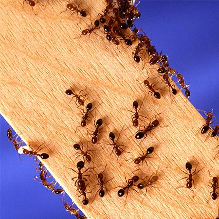 pest control saratoga springs ny